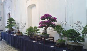 rose-ville-bonsai